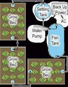 Have you wanted to start your own hydroponics garden? Now you can with this simple DIY aquaponics system that combines fish rearing with hydroponics. Aquaponics System, Hydroponic Farming, Aquaponics Greenhouse, Hydroponic Growing, Aquaponics Fish, Greenhouse Plans, Diy Hydroponics, Fish Farming, Greenhouse Ventilation
