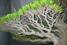 The 5th US National #Bonsai Exhibition's Finest Creative Display and Hokusai, the Iconic Japanese Print Artist