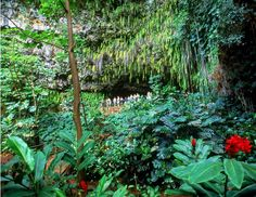 Kauai's Fern Grotto - One of Kauai's most popular tours, more about:  http://www.hawaiiactive.com/activities/kauai-fern-grotto.html