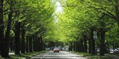 北海道大学 | ようこそさっぽろ 北海道札幌市観光案内