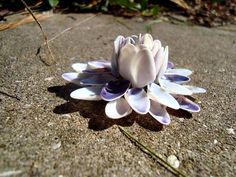 Purple Coquina Shell Flower by BeachyKeenShells on Etsy Seashell Art, Seashell Crafts, Beach Crafts, Shell Flowers, Purple Flowers, Oyster Shell Crafts, Seashell Projects, Shell Decorations, Sea Dream