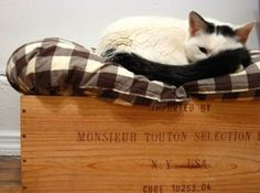 Pet bed in wooden wine box. Cute.   Photo Credit: Lola Serrano via Flickr