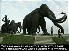 e7e0d7b2dc0 Scientists have discovered well-preserved frozen woolly mammoth fragments  deep in Siberia that may contain living cells