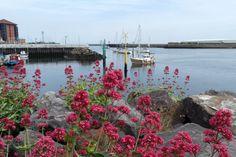 flowers_by_the_sea_by_mrmeepington-d69koxd.jpg (1095×730)