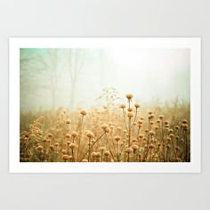 perfect for in the bedroom. brings in the golden color with still some blue     Daybreak in the Meadow Art Print by Olivia Joy StClaire - $19.00