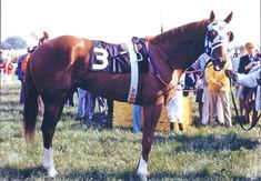 Hangin With Haskin Secretariat Photo Album ~ I have posted photos of Secretariat over the years, including a collection of shots seven years ago, but never all of them in one place. I figured it was time to put all these photos together in a single blog, just to have them archived and easily accessible.