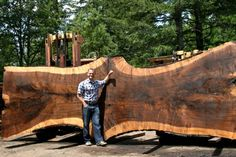 Would love a piece of that beautiful wood for a BIG live edge table. Massive #blackwalnut #hardwood #slab. The tree recovered in July 2014 in Oregon. Currently Air-drying with 6 other slabs from the same tree. See http://www.jewellhardwoods.com for details.