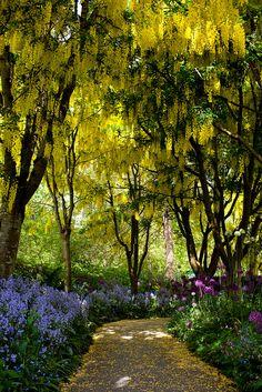 The golden path at VanDusen Botanical Garden in Vancouver, Canada (by Junnn).