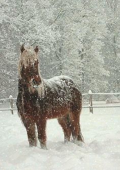 The last snowfall...