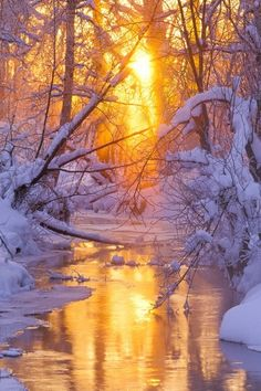 ~~'Serenity' - winter light penetrating woods surrounding small flowing creek | Alaska Landscape Photographers Michael DeYoung~~