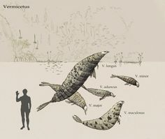 In that weird but fascinating place between wonderful and yeuuch. Genius | Maggot seals by Hyrotrioskjan.deviantart.com on @deviantART