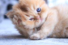 Te lo contamos todo sobre la conjuntivitis en gatos