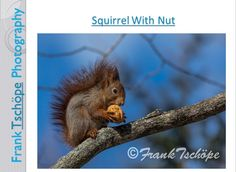 This beautiful picture of a squirrel was taken in Stockholm Skansen.