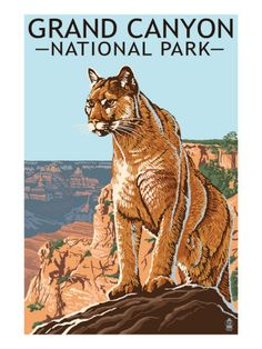 Grand Canyon National Park - Mountain Lion