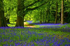 bluebell forest cabin - Google Search