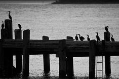 Paul Strand | Enmanscamera's Blog - Kamloops