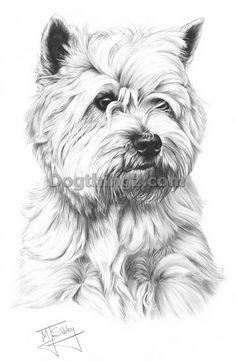 West Highland White Terrier fine art dog print