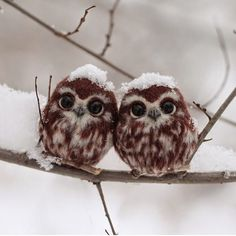 """Follow @wonderful_earthpix for more amazing nature pics daily!  Two happy little owls, Russia  Photo by Irina Scherbakova"""