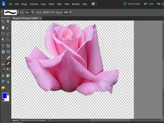 Removing background from an image in Photoshop Elements instructions