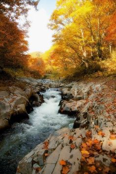 Little River, Great Smoky Mountains National Park, Tennessee