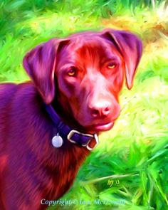 Chocolate Labrador Print  8x10 Chocolate by ScottieInspired, $12.50