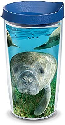 Amazon.com | Tervis Manatee Insulated Tumbler with Wrap and Blue Lid, 16oz, Clear: Tumblers: Tumblers & Water Glasses Clear Tumblers, Manatees, Insulated Tumblers, Glasses, Amazon, Water, Blue, Eyewear, Gripe Water