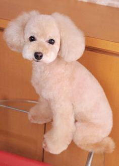 タイニー・ベイビー --愛犬の友 ヘアスタイルカタログ--