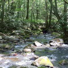 Mountain creek near Cherokee NC.went fishing with Courtney's friends when she was in middle school Going Fishing, Fly Fishing, Cherokee Nc, Mountain Vacations, Great Smoky Mountains, Ancestry, Middle School, North Carolina, Places Ive Been