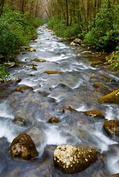 Oconaluftee River ~ Great Smoky Mountains National Park, Tennessee                                                                                                                                                      More