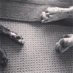 Puppy paws #greatdanes