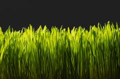 Your grass may be greener than your neighbor's, but at what price?