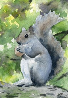 SQUIRREL Painting, ACEO Miniature Art Print on W/C Paper Signed by Artist DJR     eBay