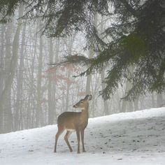 Bambi in the snow...
