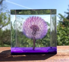 A personal favorite from my Etsy shop https://www.etsy.com/listing/280168134/purple-puffy-oregonian-dandelion-wishie