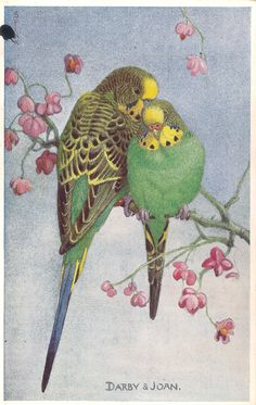 """Lot of 6 Parakeet Vintage Valentine's """"Lovebird"""" Postcards   eBay                                                                                                                                                      More"""