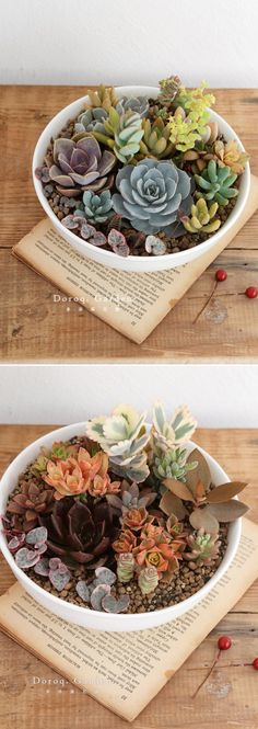 I want to plant a succulent terrarium so badly!