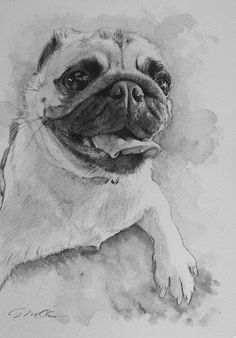 Acoustic Drawings The Shinji Ogata Gallery: Lovely Doggie! 可愛いワンちゃん!