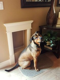 Dog Door Makeover When we bought our home we didn't have a dog but there was already a dog door installed near the back door. It was really small and leaked cold air into our home during the …