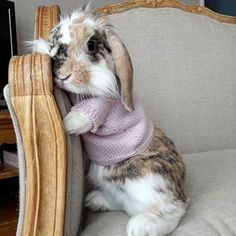 Bunny in a sweater Cute Baby Bunnies, Funny Bunnies, Cute Baby Animals, Animals And Pets, Funny Animals, Bunny Care, Hamsters, Honey Bunny, Kawaii