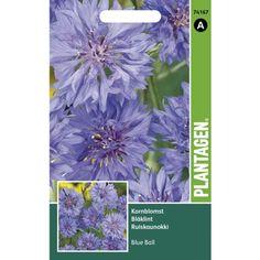 Klassisk sommerblomst, blå blomster, høye stilker. Høyde: ca. 90 cm. Fin til snitt. Blåklint tiltrekker sommerfugler og bier. Trives i sol-halvskygge i næringsrik, veldrenert jord. ...