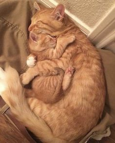 Cute Cats And Kittens, Baby Cats, I Love Cats, Kittens Cutest, Kitty Cats, Ragdoll Kittens, Kitten Love, Funny Cats, Funny Animals
