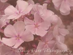 Home Decor Fine Art Pink and Pretty Summer by ChaiseLongueGallery, $5.00