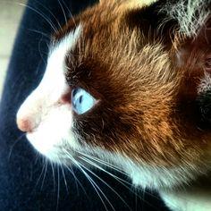 Sky-blue Eyes