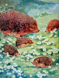 Green Willow Farm. Hedgehog illustration by Eileen Soper