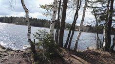 #koivut #järvi #trees #lake #Finland Valokuva - Google Kuvat