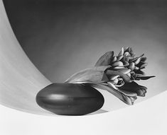 Photos - Fotos: Robert Mapplethorpe - Part 4 - Flowers - Flores - 15 photos - Links Patti Smith, Andre Kertesz, Flower Images, Flower Photos, Black And White Portraits, Black And White Photography, Robert Mapplethorpe Photography, Hbo Documentaries, I Robert