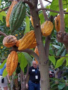 Cacao Edible Wild Plants, Crafts, Manualidades, Handmade Crafts, Craft, Arts And Crafts, Artesanato, Handicraft