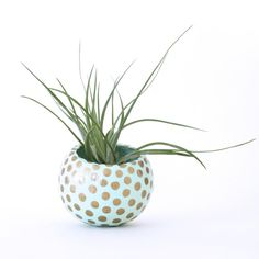 Air Planter with Air Plant Mint with Gold Dots by ThriftedandMade