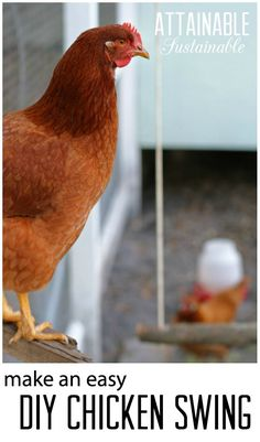 Make a DIY backyard chicken swing from items you probably already have on hand. Instant entertainment for you AND your hens!