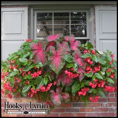 Window Boxes, Planter Boxes & Flower Boxes - Hooks & Lattice Shady window boxes - begonias and caladiums Window Box Flowers, Window Boxes, Flower Boxes, Container Flowers, Container Plants, Container Gardening, Window Planters, Planter Boxes, Planter Ideas